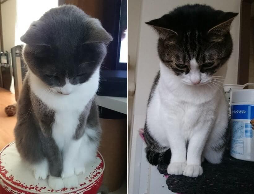 お辞儀する愛猫モコとミミ