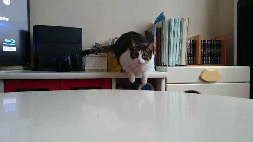 こちらに向かって飛び立とうと構える愛猫ミミ