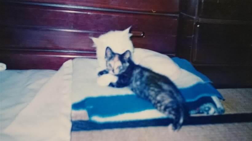 愛猫ペルシャと子猫時代のサビ猫タム