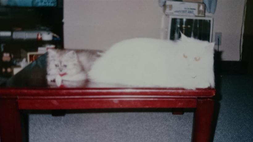 愛猫ペルシャと子猫だったミュウ