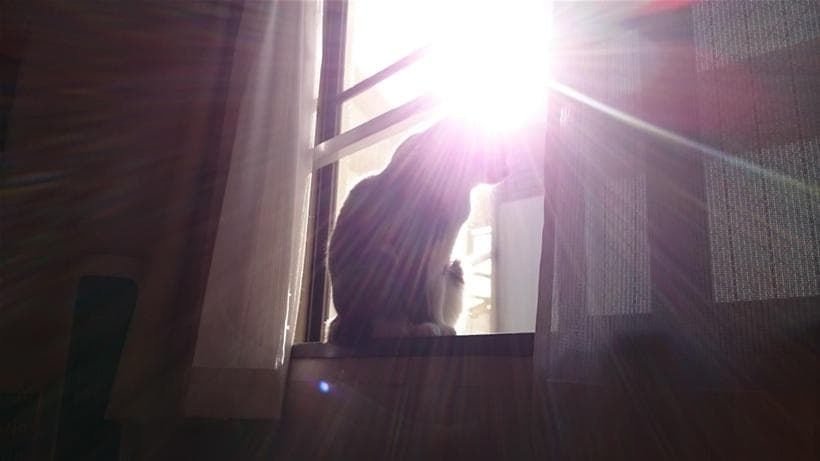 太陽の光に包まれる愛猫モコ