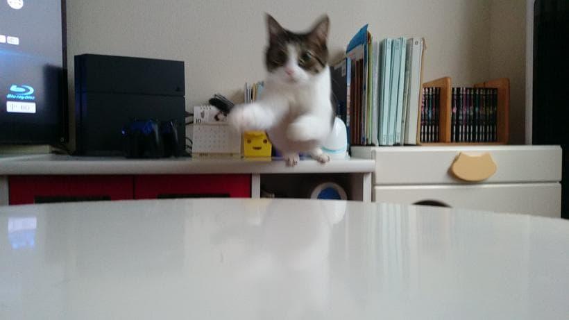 こちらに向かってジャンプする愛猫ミミ