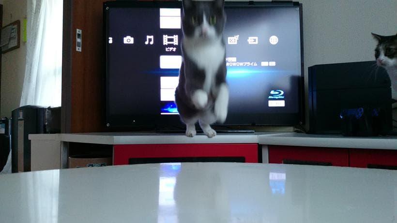 こちらに向かってジャンプする愛猫モコ