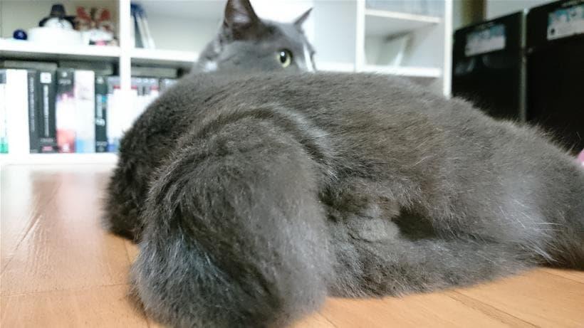 愛猫モコの尻尾とにゃん玉