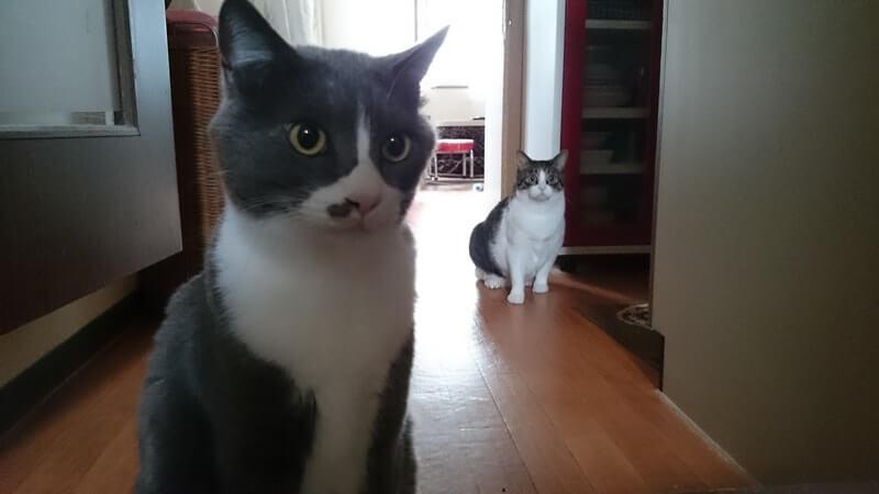 お出迎えする愛猫モコとミミ