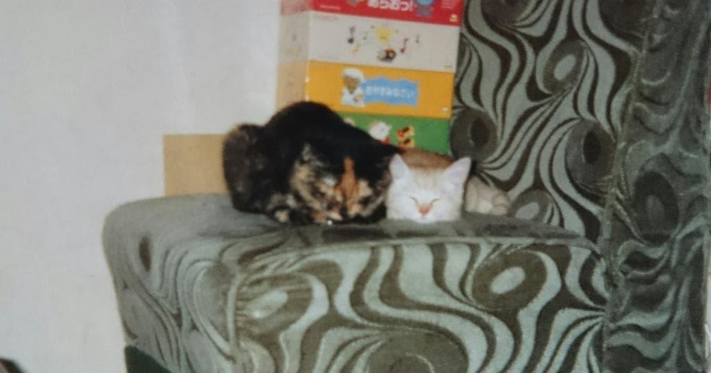 サビ猫タムと息子のチャウ