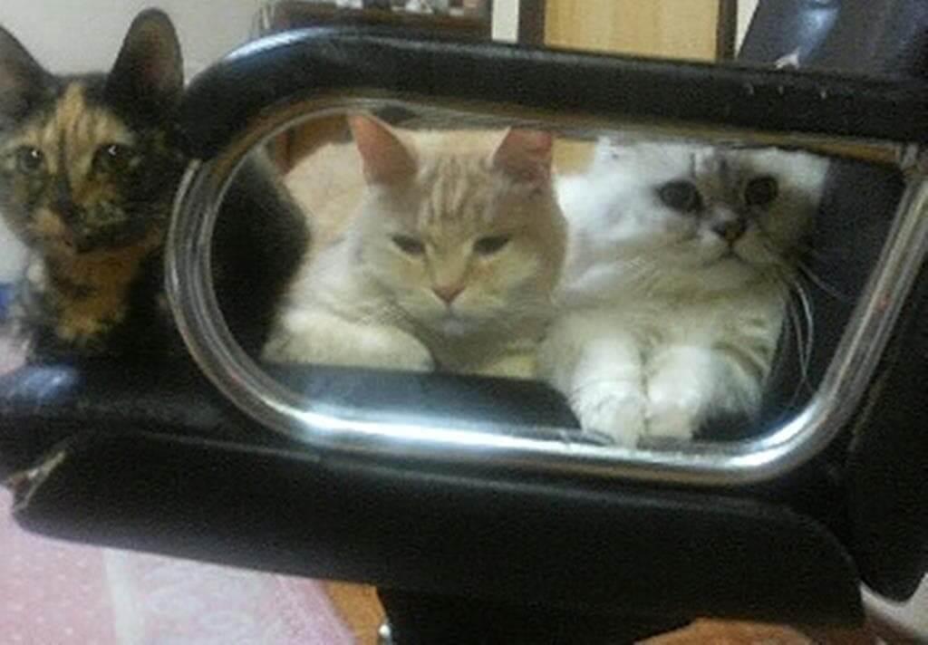 サビ猫タムの家族