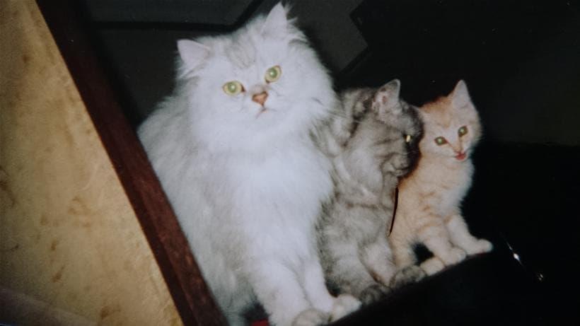 並んで立つ愛猫ミュウ&ピー&チャウ