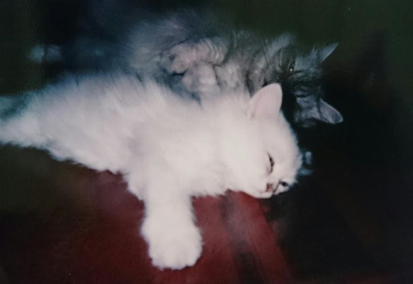 愛猫ミュウと幼少期の愛猫ピー2