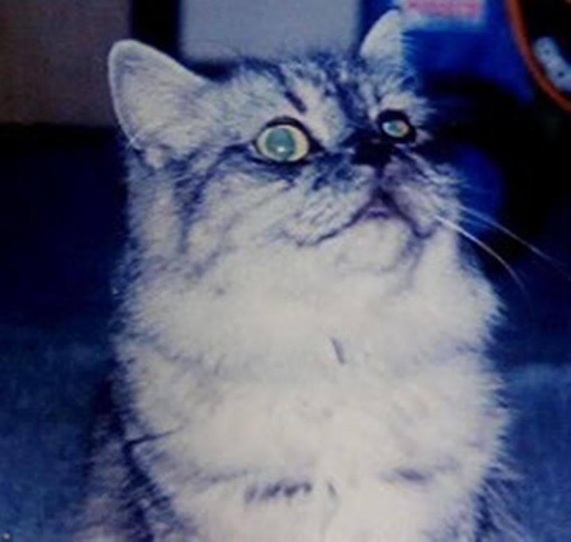 ふわふわもこもこ狸のような片目の愛猫ミュウ