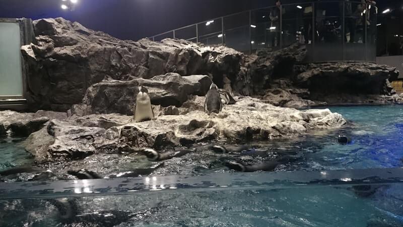 ペンギンブース全体