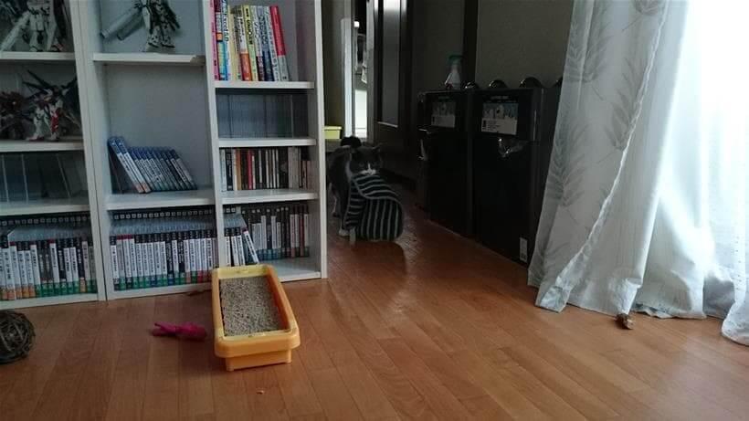 タオルを咥えて暗闇からこちらにやってく来る愛猫モコ