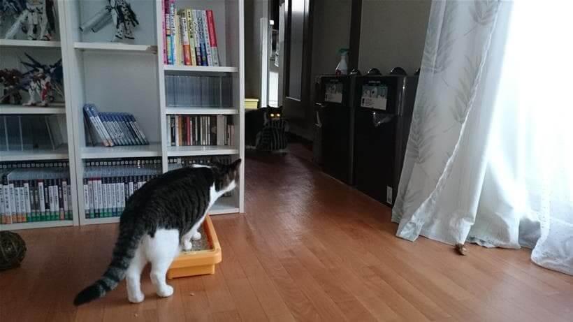 タオルを咥えて暗闇から目を光らせる愛猫モコ