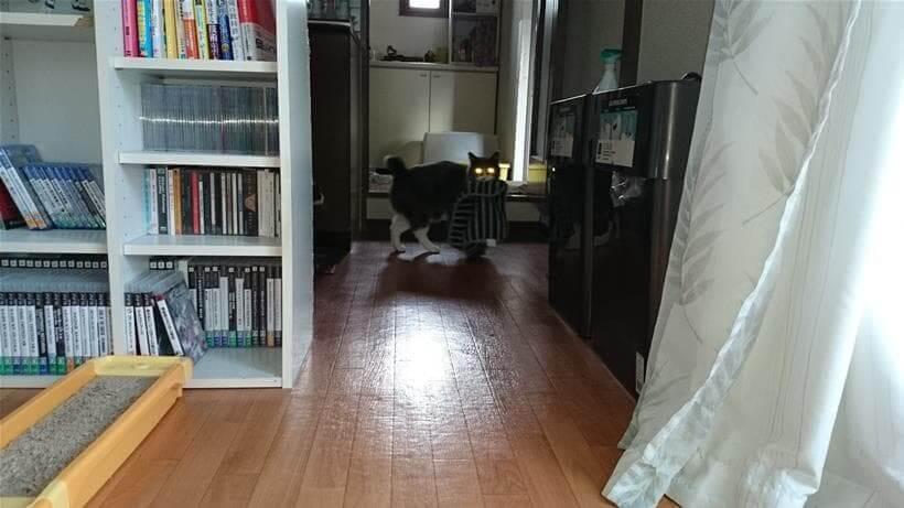 暗いところで目を光らせながらタオルを咥えこちらを見ている愛猫モコ
