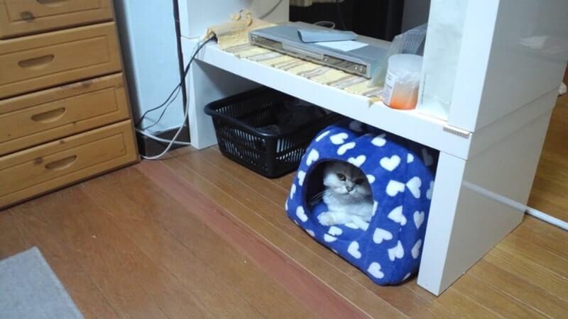 猫ベッドに入っている長毛種の愛猫ピー