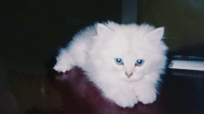 子猫時代の愛猫ピー