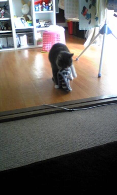 干していたタオルを取って咥え出す若き日の愛猫モコ