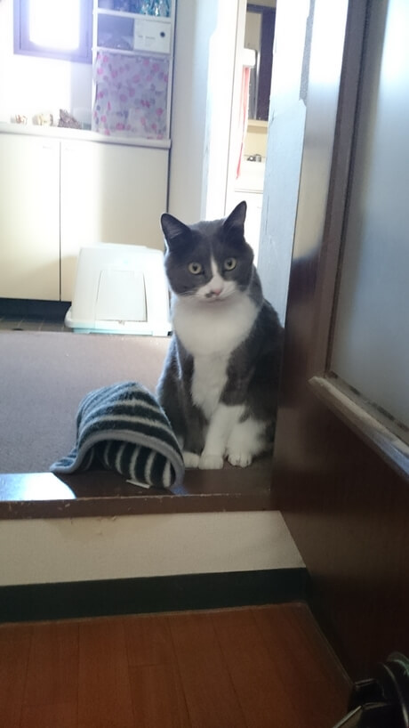 タオルを側に置いてこちらを見ている愛猫モコ