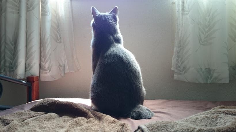 短い尻尾をペタンとさせて座る愛猫モコの後ろ姿