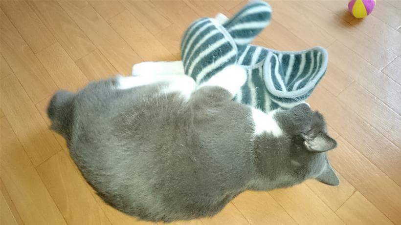 タオルに激しい猫キックを浴びせる愛猫モコ