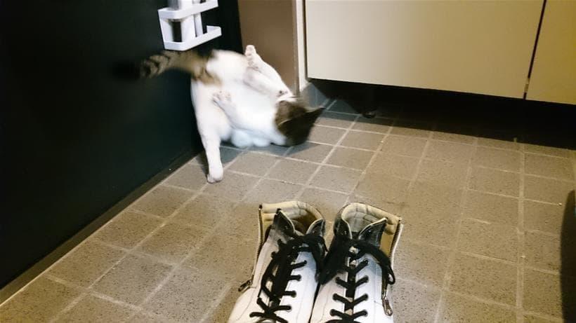 逆さになって足を突っ張る愛猫ミミ