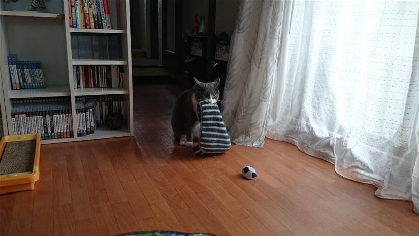 タオルを咥えながら座っている愛猫モコ