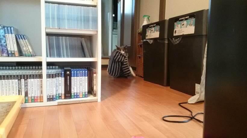 タオルを咥えながら左足を大きく開いて歩く愛猫モコ