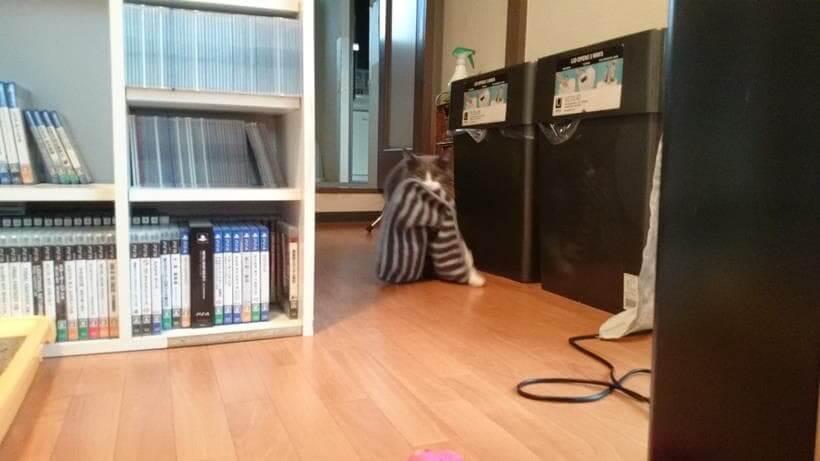 タオルを咥えながら左足を大きく開く愛猫モコ