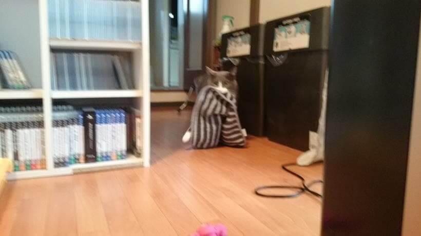 タオルを咥えながら右足を大きく開いて歩く愛猫モコ