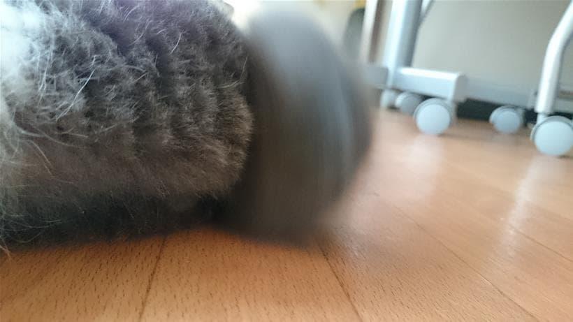 ぶるんっと丸く見える短い尻尾を振る愛猫モコ