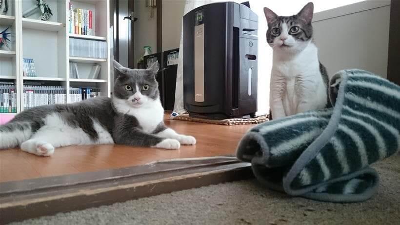 タオルを前に置いて横になる愛猫モコとその横に座るミミ