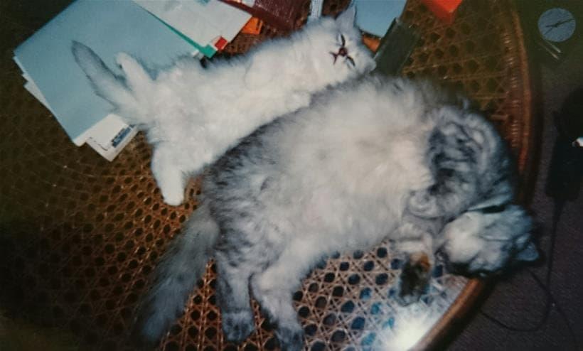 先住猫ミュウと一緒に寝る子猫時代の愛猫ピー