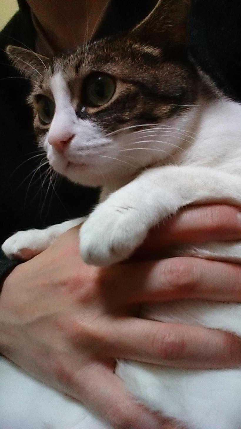 抱えられる愛猫ミミ