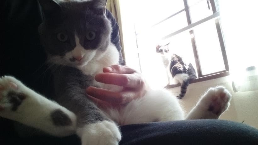 愛猫モコを膝の上に乗せて抱っこ