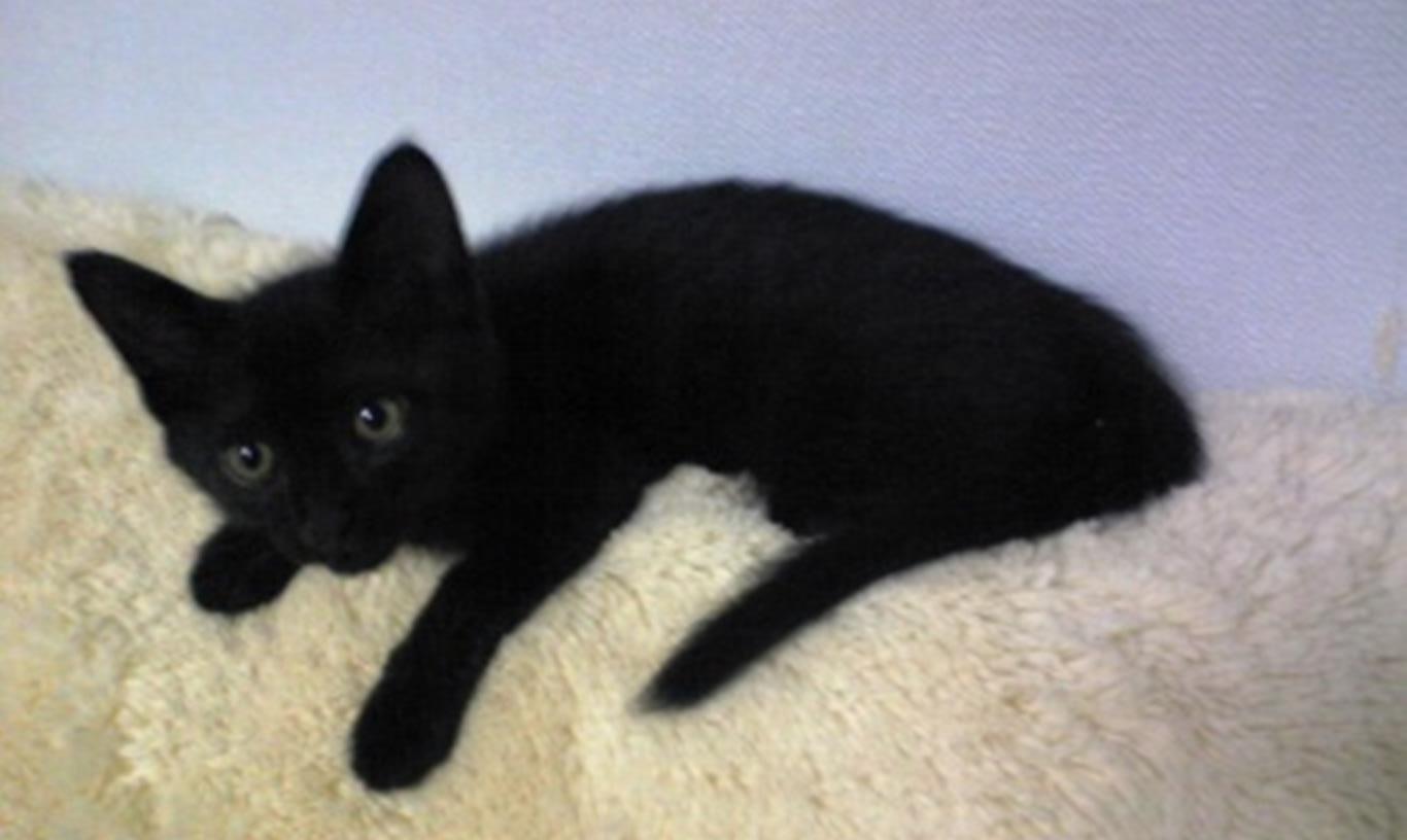 ソファで寝る子猫時代の黒猫カイくん
