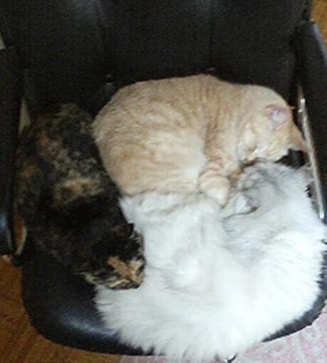 椅子の上でかたまって寝る猫ファミリー