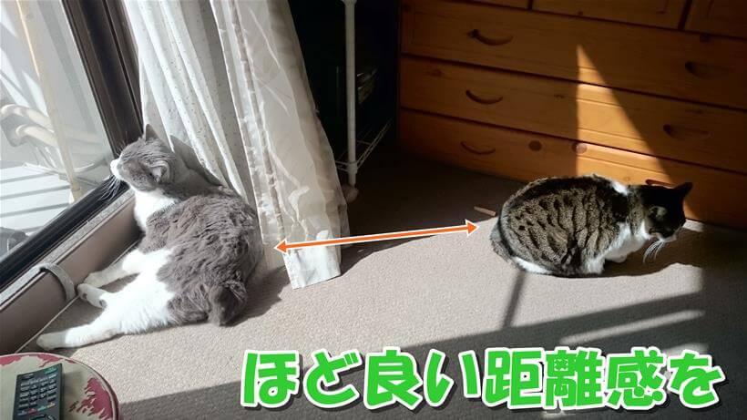 お互いにほどよい距離感を保つ愛猫たち