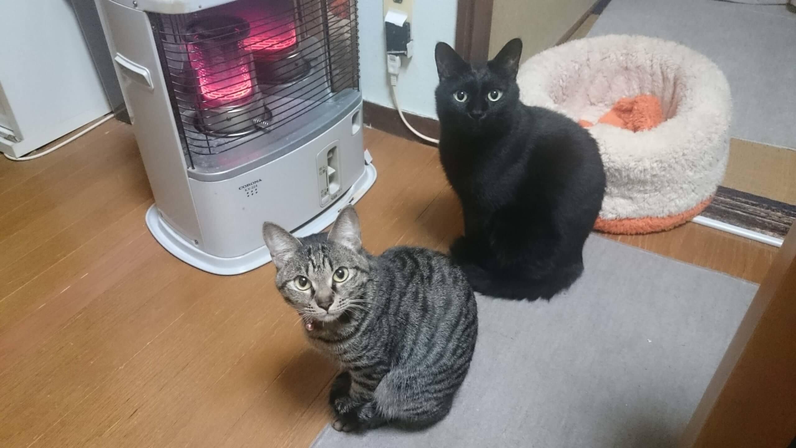 ストーブ前にて実家の黒猫カイくんとキジトラのココちゃん
