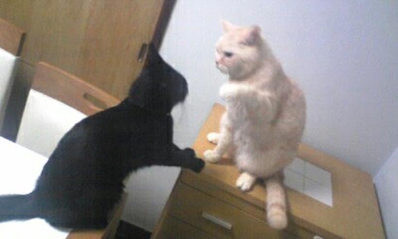 茶トラ猫のチャウと戦う黒猫カイくん