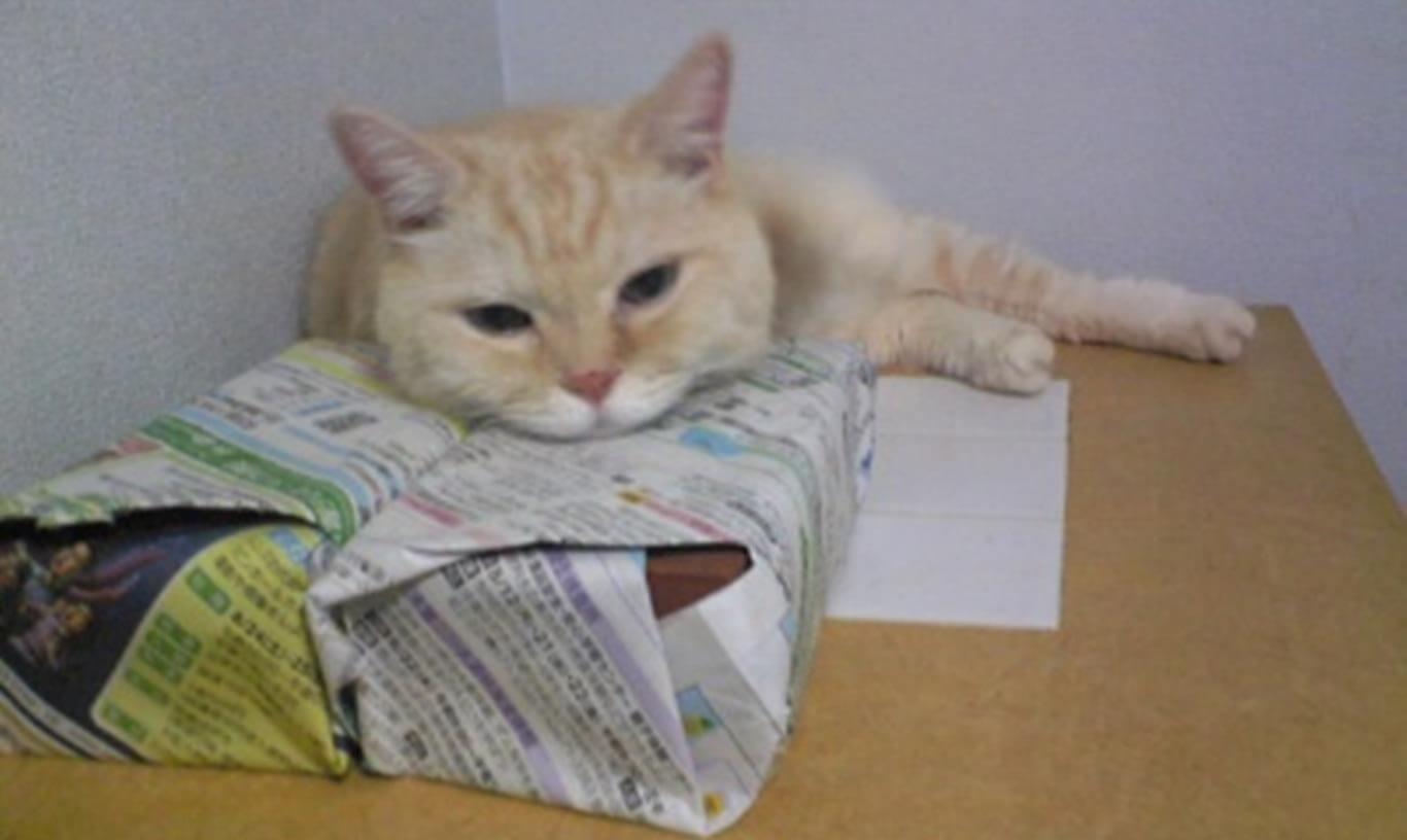 箱に顎を乗せて眠そうにしている茶トラ猫チャウ