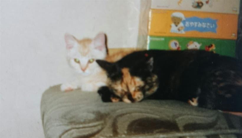 母猫タムの側にいる子猫時代の茶トラ猫チャウ