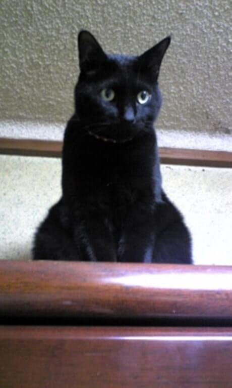 姉の猫で大きい黒猫ナナちゃん