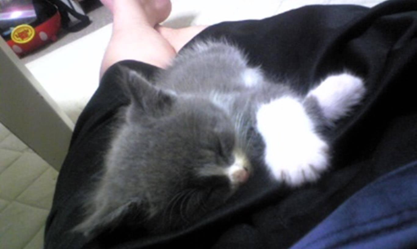 飼い主の上で眠る子猫時代の愛猫モコ
