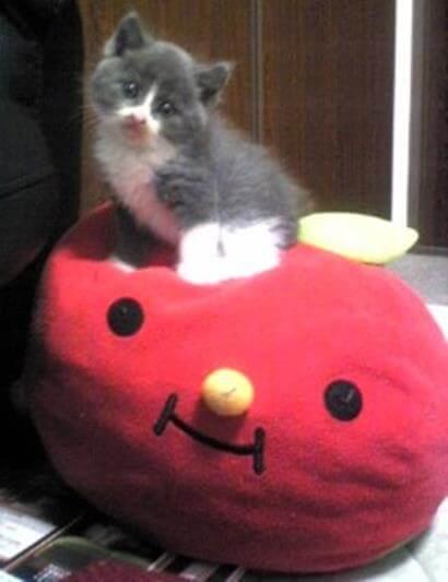 クッションの上で愛らしくポーズをとる子猫期の愛猫モコ