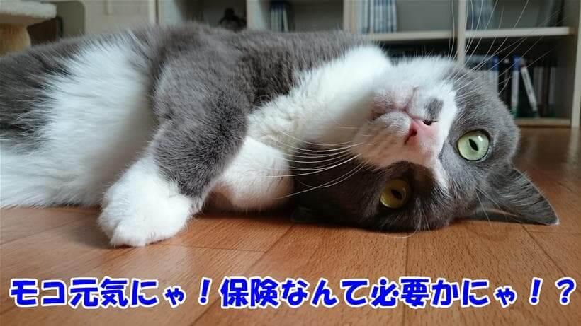 保険なんて必要なのかを訴える体の愛猫モコ