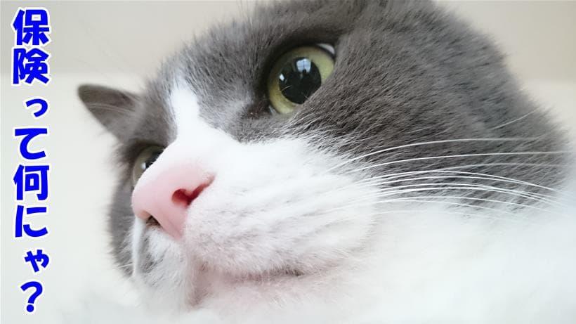 保険て何?と疑問に思う体の愛猫モコ