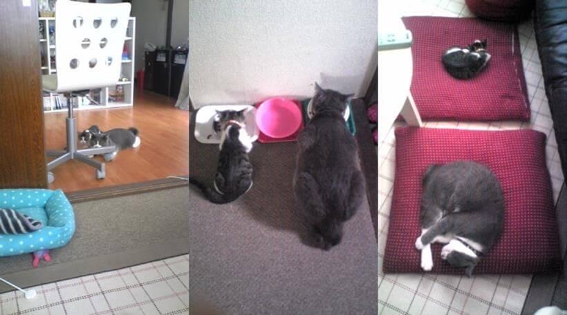 遊ぶ時も、ご飯の時も、寝る時も、先住猫モコといつも一緒だった子猫期の愛猫ミミ