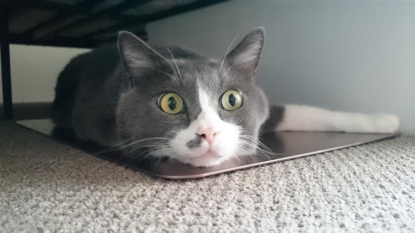 ベッド下に設置したひんやりプレート上で涼む愛猫モコ