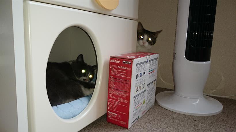 ペットハウス内と外から飼い主をガン見する愛猫たち