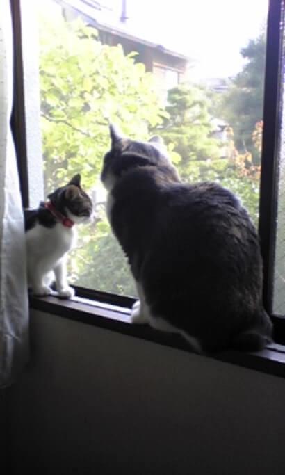 仲睦まじく外を眺める先住猫モコと子猫期の愛猫ミミ